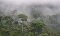 Rainy Season in the Amazon